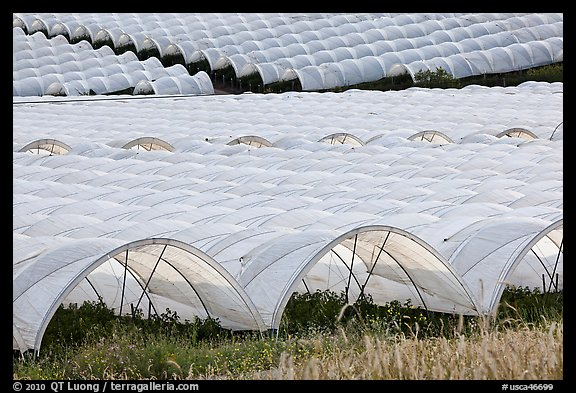 Canopies for farming raspberries. Watsonville, California, USA (color)