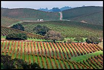 Wine country scenery in Carneros Valley. Napa Valley, California, USA (color)