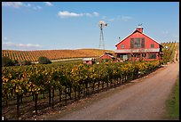 Red barn in vineyard. Napa Valley, California, USA ( color)