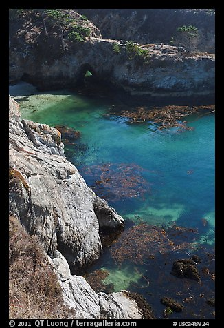 Emerald waters and kelp, China Cove. Point Lobos State Preserve, California, USA (color)