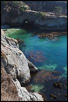 Emerald waters and kelp, China Cove. Point Lobos State Preserve, California, USA