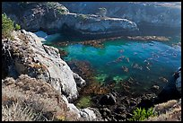 Rocks, water, and kelp, China Cove. Point Lobos State Preserve, California, USA (color)