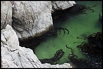 Green waters and kelp, China Cove. Point Lobos State Preserve, California, USA