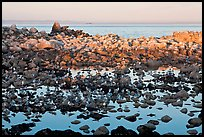 Seabirds and rocks at sunset. Pacific Grove, California, USA