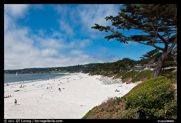 Carmel Beach and cypress. Carmel-by-the-Sea, California, USA (color)
