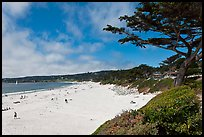 Carmel Beach and cypress. Carmel-by-the-Sea, California, USA ( color)
