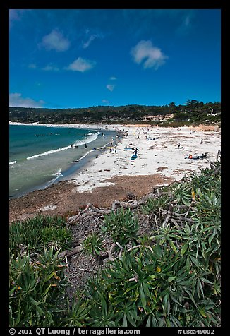 Carmel Beach with foreground of shrubs. Carmel-by-the-Sea, California, USA (color)