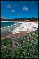 Carmel Beach with foreground of shrubs. Carmel-by-the-Sea, California, USA ( color)