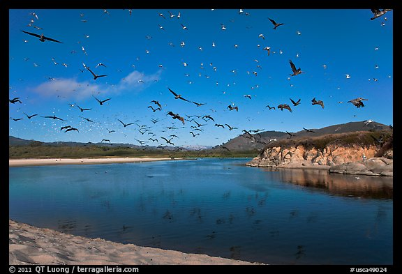 Birds flying above Carmel River. Carmel-by-the-Sea, California, USA (color)