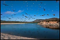 Birds flying above Carmel River. Carmel-by-the-Sea, California, USA ( color)