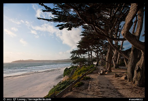 Walkway and cypress on edge of Carmel Beach. Carmel-by-the-Sea, California, USA