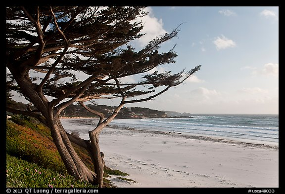 Cypress and Carmel Beach in winter. Carmel-by-the-Sea, California, USA