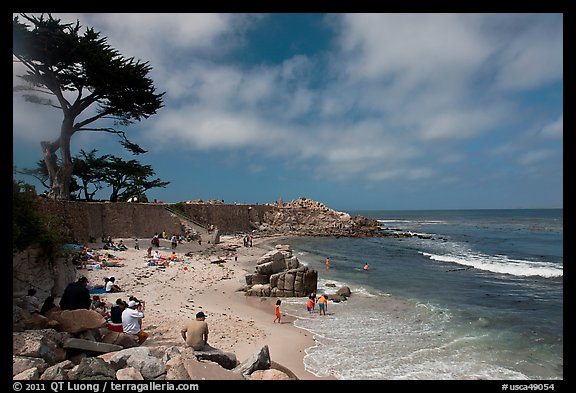Cypress and beach, Lovers Point Park. Pacific Grove, California, USA (color)