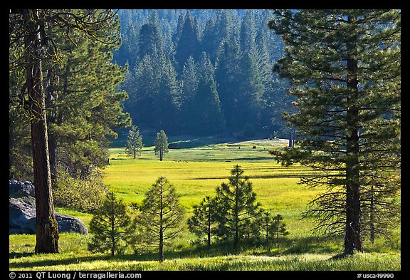 Meadow framed by pines, Giant Sequoia National Monument near Kings Canyon National Park. California, USA (color)