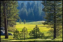 Meadow framed by pines, Giant Sequoia National Monument near Kings Canyon National Park. California, USA ( color)