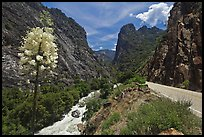 Yucca, river, and road in Kings Canyon, Giant Sequoia National Monument near Kings Canyon National Park. California, USA