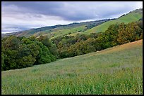 Hills in spring, Evergreen. San Jose, California, USA (color)