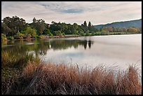 Reeds and lake, Vasona Lake County Park, Los Gatos. California, USA (color)