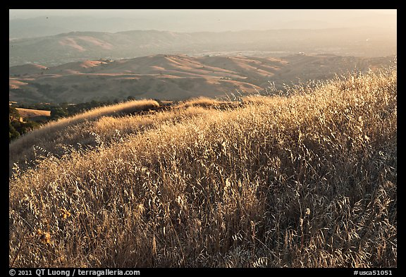 Summer grasses on Evergreen Hills. San Jose, California, USA (color)