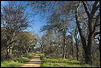 Trail, Almaden Quicksilver Park. San Jose, California, USA ( color)