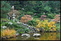 Pond and Japanese garden in autumn. Saragota,  California, USA ( color)