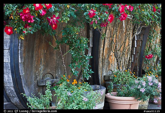 Barells and flowers, Savannah-Chanelle Vineyards, Santa Cruz Mountains. California, USA