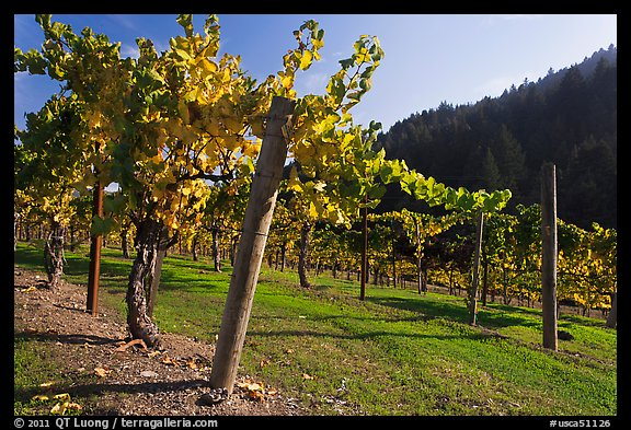 Savannah-Chanelle Vineyards, Santa Cruz Mountains. California, USA