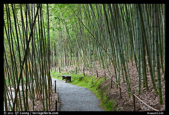 Path in bamboo forest. Saragota,  California, USA (color)