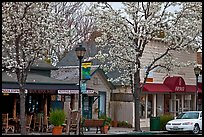 Main street in spring. Saragota,  California, USA ( color)