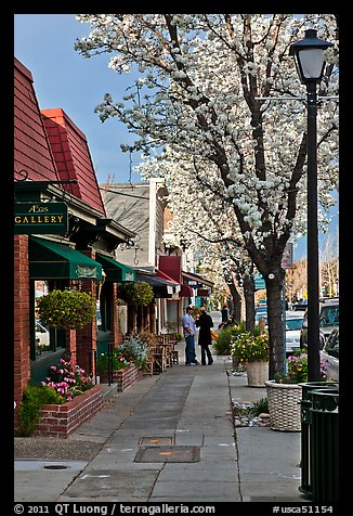Sidewalk with blossoms. Saragota,  California, USA (color)