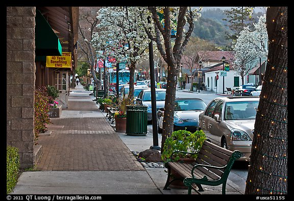 Street with blossoming trees. Saragota,  California, USA (color)