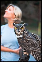 Owl and handler, Alum Rock Park. San Jose, California, USA ( color)