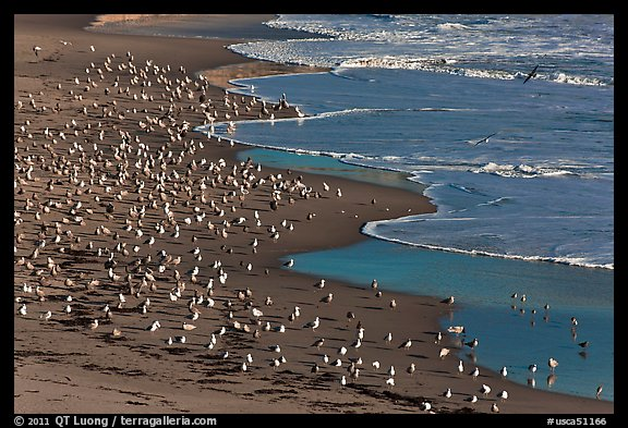 Seabirds, Waddell Beach. California, USA (color)