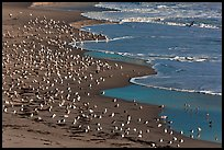 Seabirds, Waddell Beach. California, USA ( color)