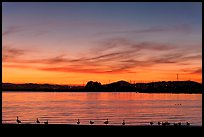 Ducks at sunset, Robert W Crown Memorial State Beach. Alameda, California, USA (color)
