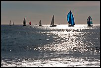 Sailboats and glimmer. Santa Cruz, California, USA