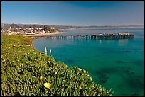 Iceplant-coverd buff and pier. Capitola, California, USA ( color)