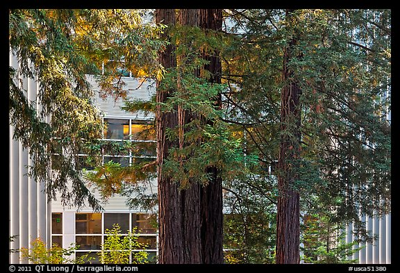 Redwood trees and campus buidling, University of California. Santa Cruz, California, USA