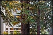 Redwood trees and campus buidling, University of California. Santa Cruz, California, USA (color)