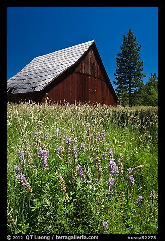Barn, Foresta. California, USA (color)