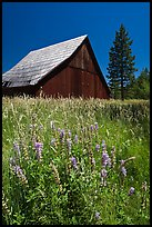 Barn, Foresta. California, USA ( color)