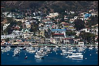 Harbor and houses on hillside, Avalon, Santa Catalina Island. California, USA ( color)