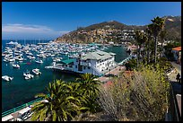 Harbor and waterfront, Avalon Bay, Catalina Island. California, USA ( color)
