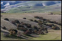Gentle hills and trees near King City. California, USA (color)