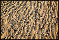 Ripples and animal tracks on dunes. Mojave National Preserve, California, USA (color)