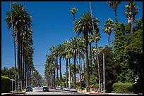 Street lined up with tall palm trees. Beverly Hills, Los Angeles, California, USA ( color)