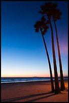 Palm trees and empty beach at sunset. Newport Beach, Orange County, California, USA ( color)