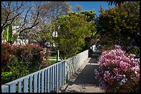 Pedestrial residential alley in springtime. Venice, Los Angeles, California, USA ( color)