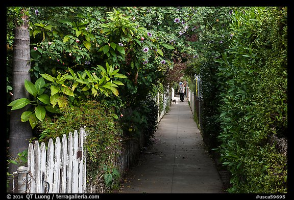 Lush pedestrian alley, with man walking dog in distance. Venice, Los Angeles, California, USA (color)