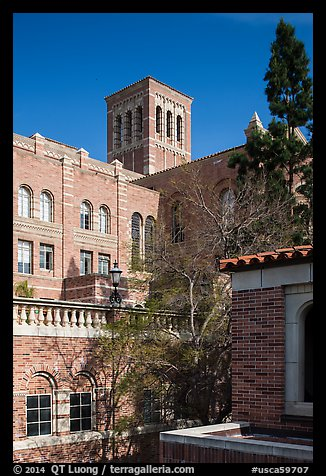 University of California at Los Angeles, Westwood. Los Angeles, California, USA (color)